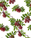 Ashberry Branch Seamless Pattern Stock Image