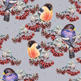 Ashberry and bullfinch. Blue background, crayon,  handmade Royalty Free Stock Photos