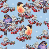 Ashberry and bullfinch. Blue background, crayon,  handmade Stock Images