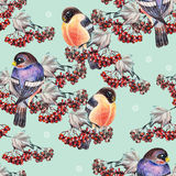 Ashberry and bullfinch. Blue background, crayon,  handmade Stock Image