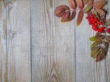 Ashberry-Dekoration auf hölzernem Hintergrund Lizenzfreie Stockfotos