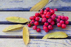 Ashberry en el banco del vintage Aún vida otoñal Imagenes de archivo