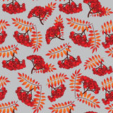 Ashberry seamless pattern Stock Photography