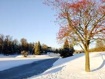 Ashberry träd i parkera av den Panevezys staden Arkivfoto