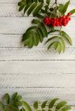 Ashberry vermelho em um fundo branco Fotos de Stock