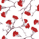 Ashberry on the white snow seamless vector pattern Stock Image
