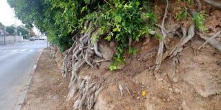 Ashdod strand Fotografering för Bildbyråer
