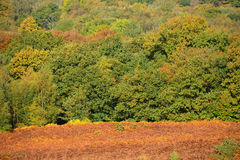Ashdown forest in autumn Stock Image