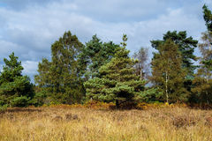 Ashdown Forest in Autumn Royalty Free Stock Image