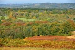 Ashdown las w jesieni obraz stock