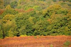 Ashdown skog i höst fotografering för bildbyråer