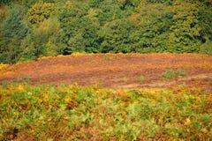 Ashdown-Wald im Herbst Stockfotos