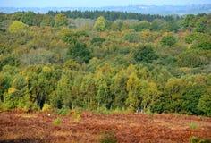 Ashdown-Wald im Herbst Stockfoto