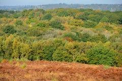Ashdown-Wald im Herbst Stockfotografie