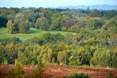 Ashdown-Wald im Herbst Lizenzfreies Stockfoto