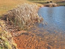 Ashe Park Trout Pond i Jefferson, North Carolina arkivbilder