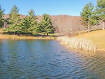 Ashe Park Trout Pond i Jefferson, North Carolina royaltyfri bild