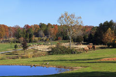 Asheboro Zoo with Elephants. The Watani Grasslands at the Asheboro Zoo in North Carolina featuring elephants stock photography