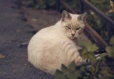 Ashen handsome cat. Stock Photo