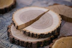 Ashen tree cross section at the workshop stock photography