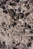 ashes текстура угля стоковые фотографии rf