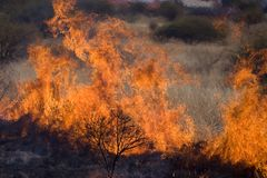 Ashes. A fire ravages grazing and threatens property royalty free stock images