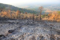 Ashes and fallen trees as a result of wildfire and deforestation for agriculture in tropical rainforest of Thailand stock images