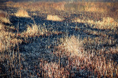 Ashes after a fire in the dry grass field, close Stock Photo