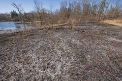 Ashes Left After a Controlled Prairie Burn. In Spring Valley Nature Center in Schaumburg, Illinois stock image