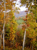 Asheville in the fall stock image