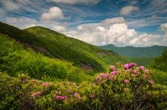 Asheville Pólnocna Karolina grani Parkway Błękitna wiosna Kwitnie Sceni Zdjęcia Royalty Free