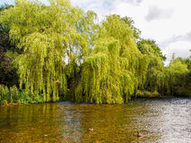 Ashford in the water Stock Photography