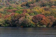 Ashi Lake,Japan Stock Images