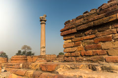 Ashokapilla Stock Afbeeldingen