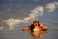 ashore помыто Стоковые Изображения RF