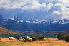 Ashore are grazed herd of horses Stock Photography