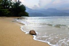 ashore tvättade sig kokosnöten royaltyfri foto