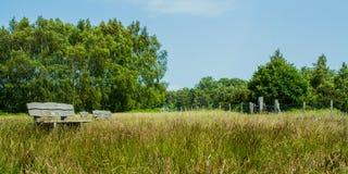 Ashtead skog. Arkivbilder