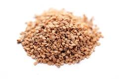 Ashwagandha seed (Withania somnifera) royalty free stock photos