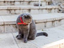 Ashy kot siedzi na krokach w wewnętrznym podwórzu kościół Maryjny Magdalene w Jerozolima, Izrael fotografia stock