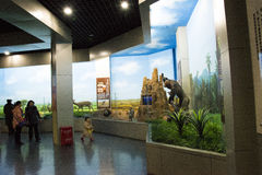 Asiático museo de China, Pekín, Pekín de la historia natural Imágenes de archivo libres de regalías