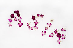 Asia. The word Asia spelt out with orchid petals royalty free stock images