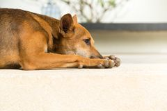 Asia Alone Dog sit on the ground Stock Photo