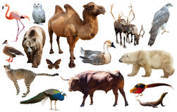 Asia animals isolated Stock Photography