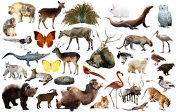 Asia animals isolated. Set of various asian isolated wild animals including birds, mammals, reptiles and insects Stock Photo