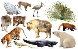 Asia animals isolated. Set of various asian isolated wild animals including birds, mammals, reptiles and insects Stock Photography