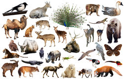 Asia animals isolated. Set of various asian isolated wild animals including birds, mammals, reptiles and insects Royalty Free Stock Photography