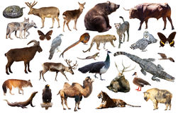 Asia animals isolated. Set of various asian isolated wild animals including birds, mammals, reptiles and insects Royalty Free Stock Images