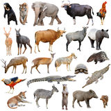 Asia animals isolated Royalty Free Stock Photography