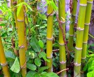 asia bambu royaltyfri bild